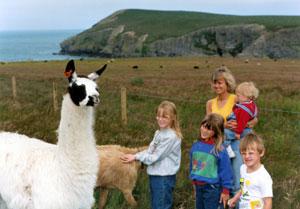 Llama Cardigan Farm Island