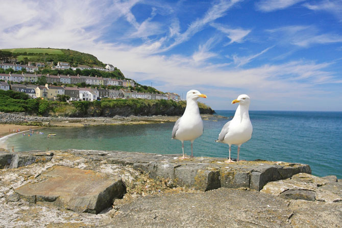 New Quay Cardigan Bay West Wales - Image by Janet Baxter