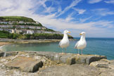 Newquay Wales campsites and cottages
