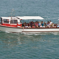 New Quay Boat Trips