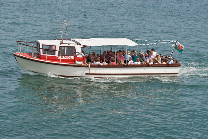 Boat Trips and Dolphin Watching
