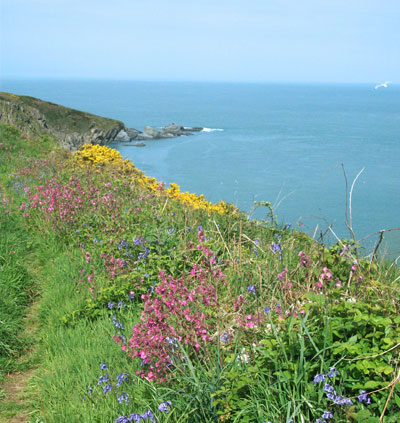 wild flowers coast path