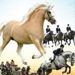 Aberaeron Festival Of Welsh Ponies & Cobs