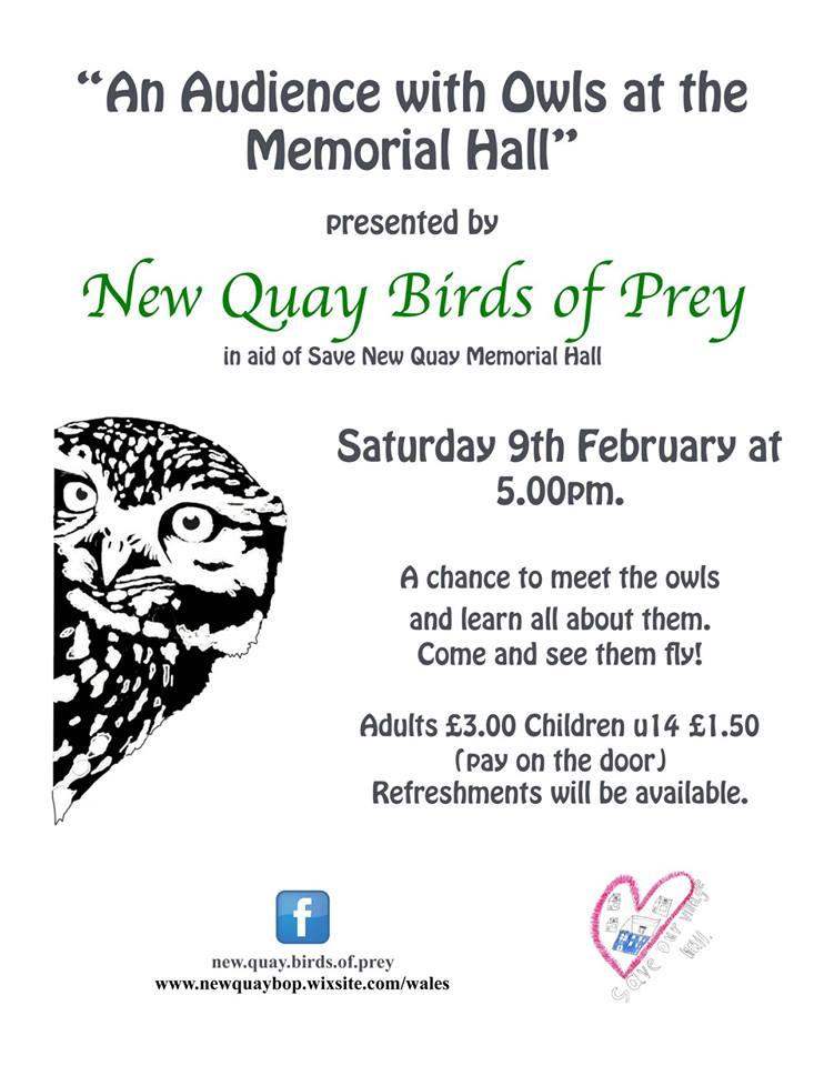 New Quay Birds of Prey