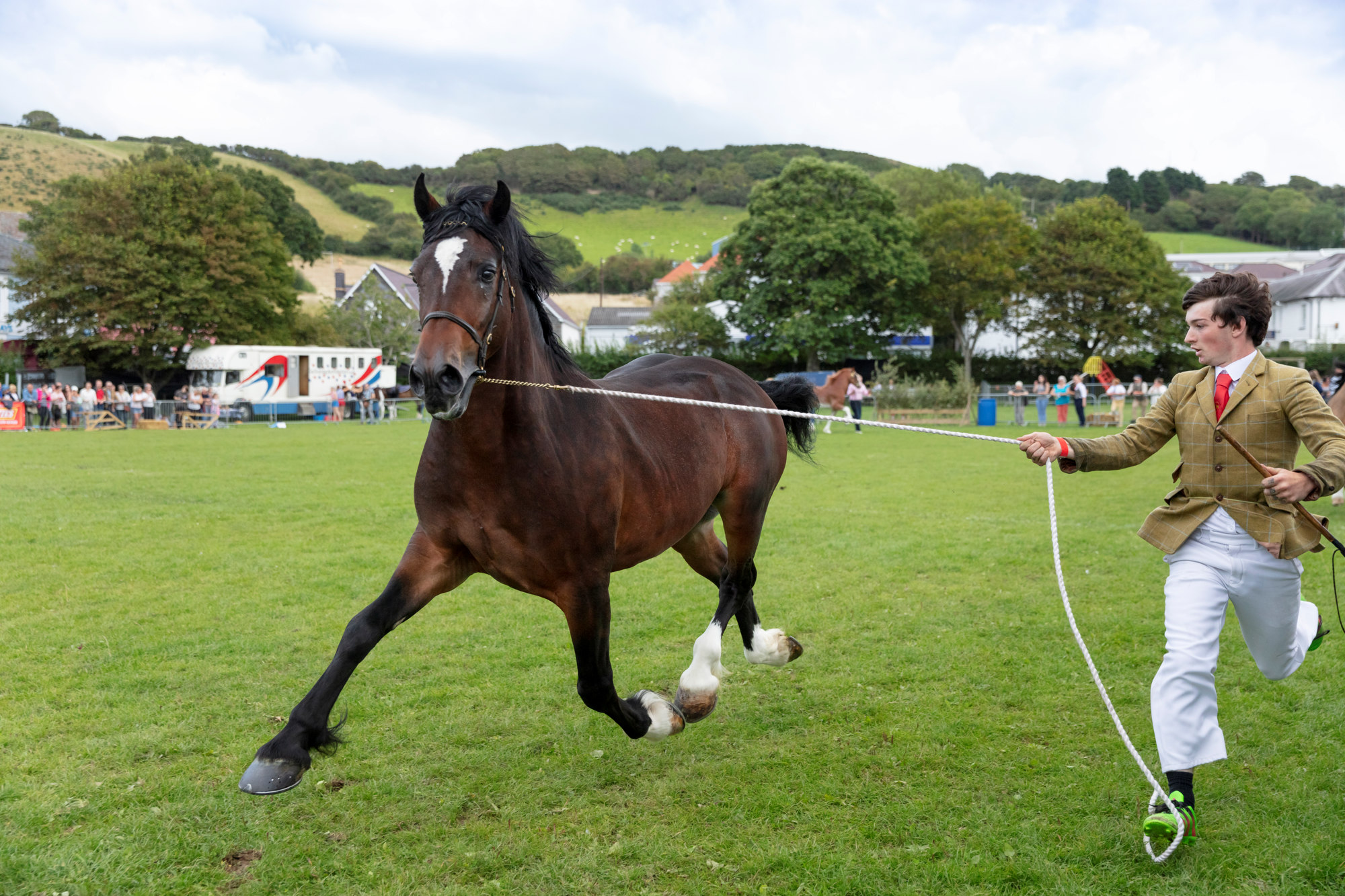 Aberaeron Festival of Welsh Ponies and Cobs