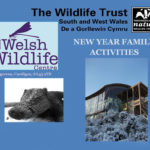 New Year at the Welsh Wildlife Centre